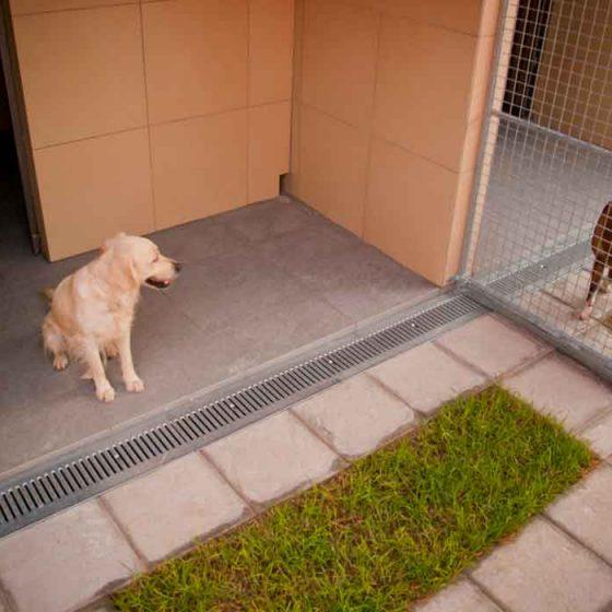 φιλοξενια σκυλων