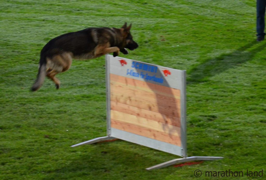 WUSV WM 2012 Austria / Balakas Vasilis & Kajou Haus Endrikat